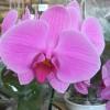 Diseño de espacios exteriores con orquídeas y plantas tropicales