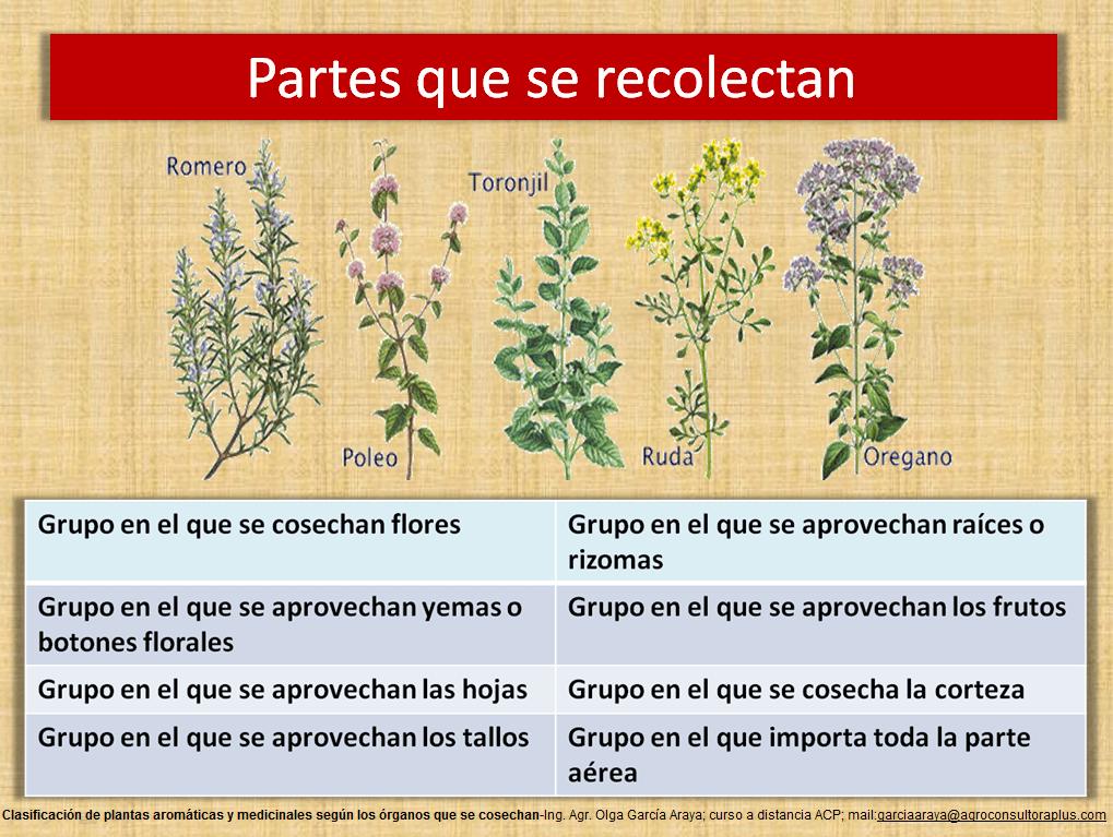 Aromaticas Y Medicinales Guia Para Emprender Un Negocio Sustentable Acp Agroconsultora Plus