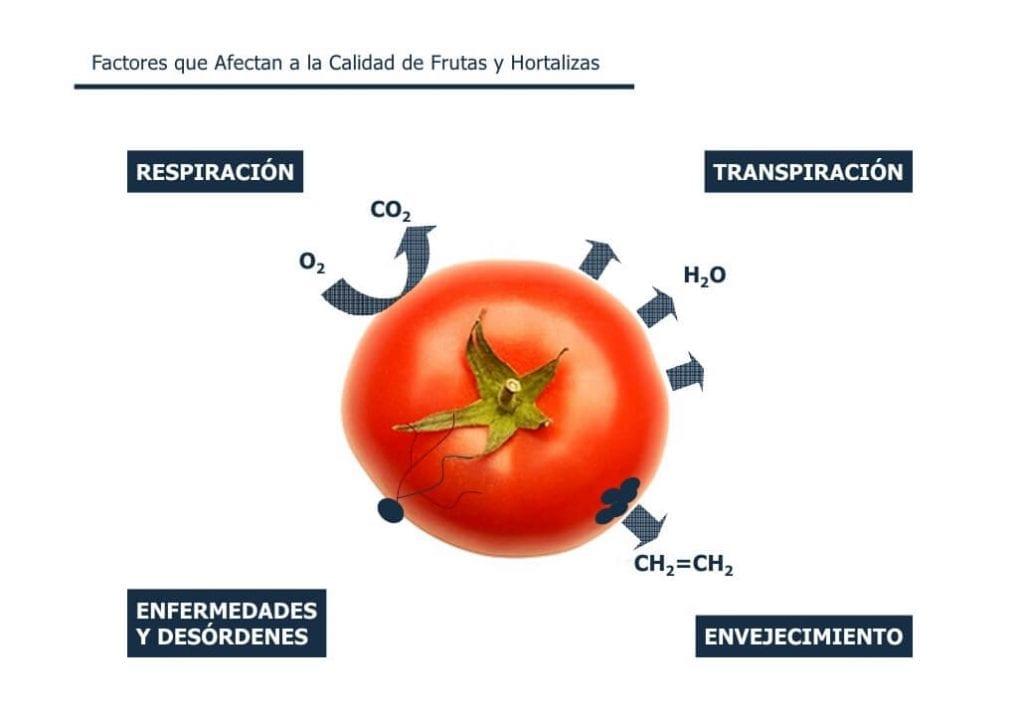 Factores Calidad en Frutas