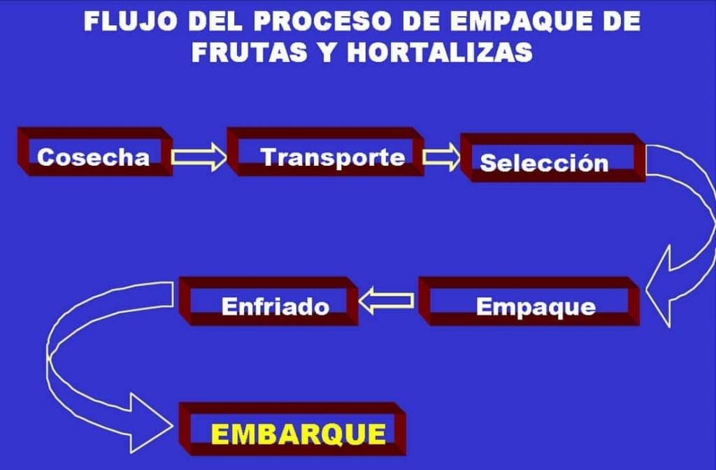 Fuente: https://www.oirsa.org/aplicaciones/subidoarchivos/BibliotecaVirtual/ManualfrutashortalitzasfrescasESA.pdf